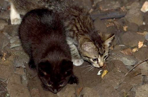 Kittens rescued from NYC subway